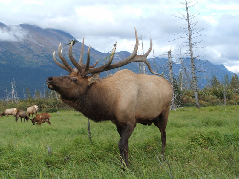 how-to-get-rid-of-elk